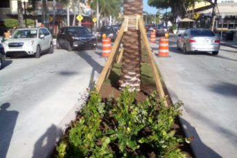median with palm trees