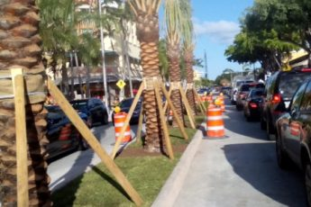 palm trees in median with supports
