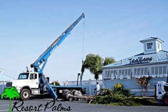 crane on truck moving palm trees