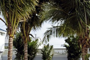 palm trees and tropical plants