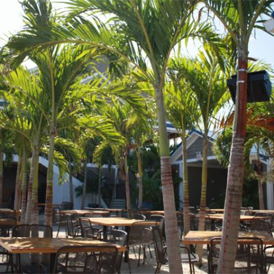 Restaurant with palm trees